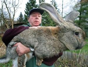 memelihara kelinci itu mudah
